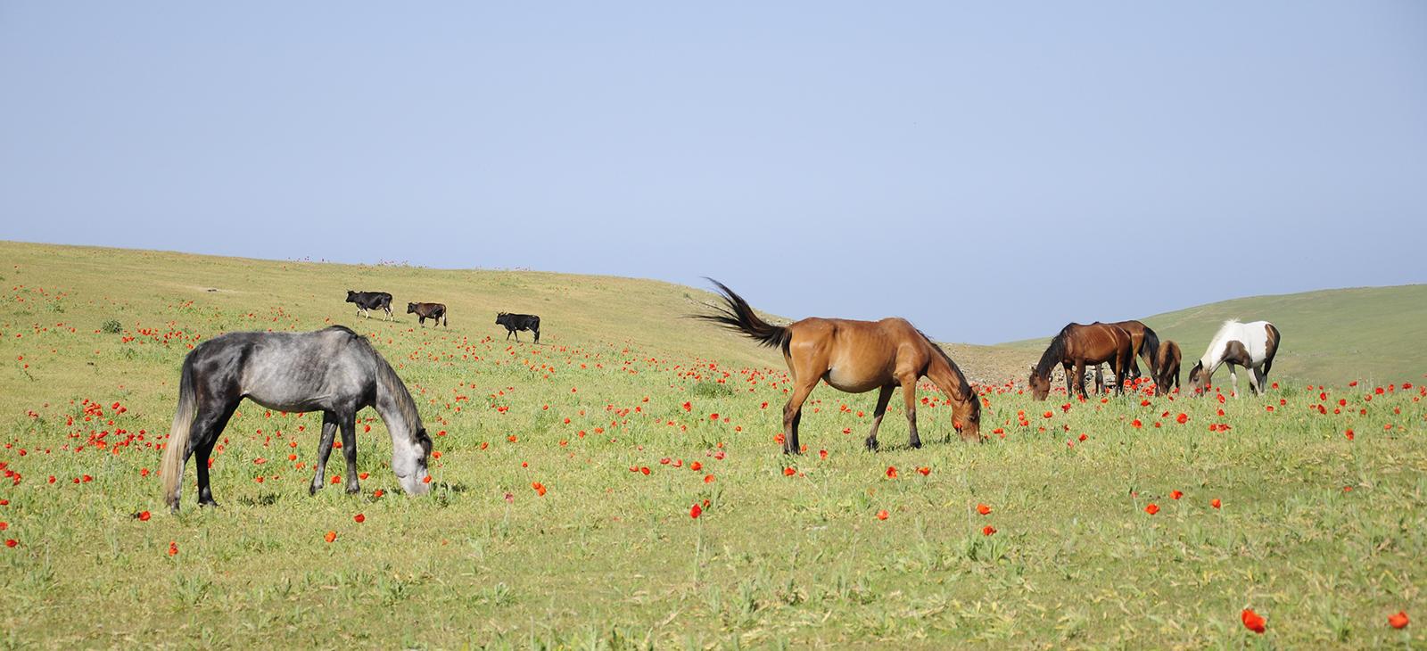 پستانداران ایران