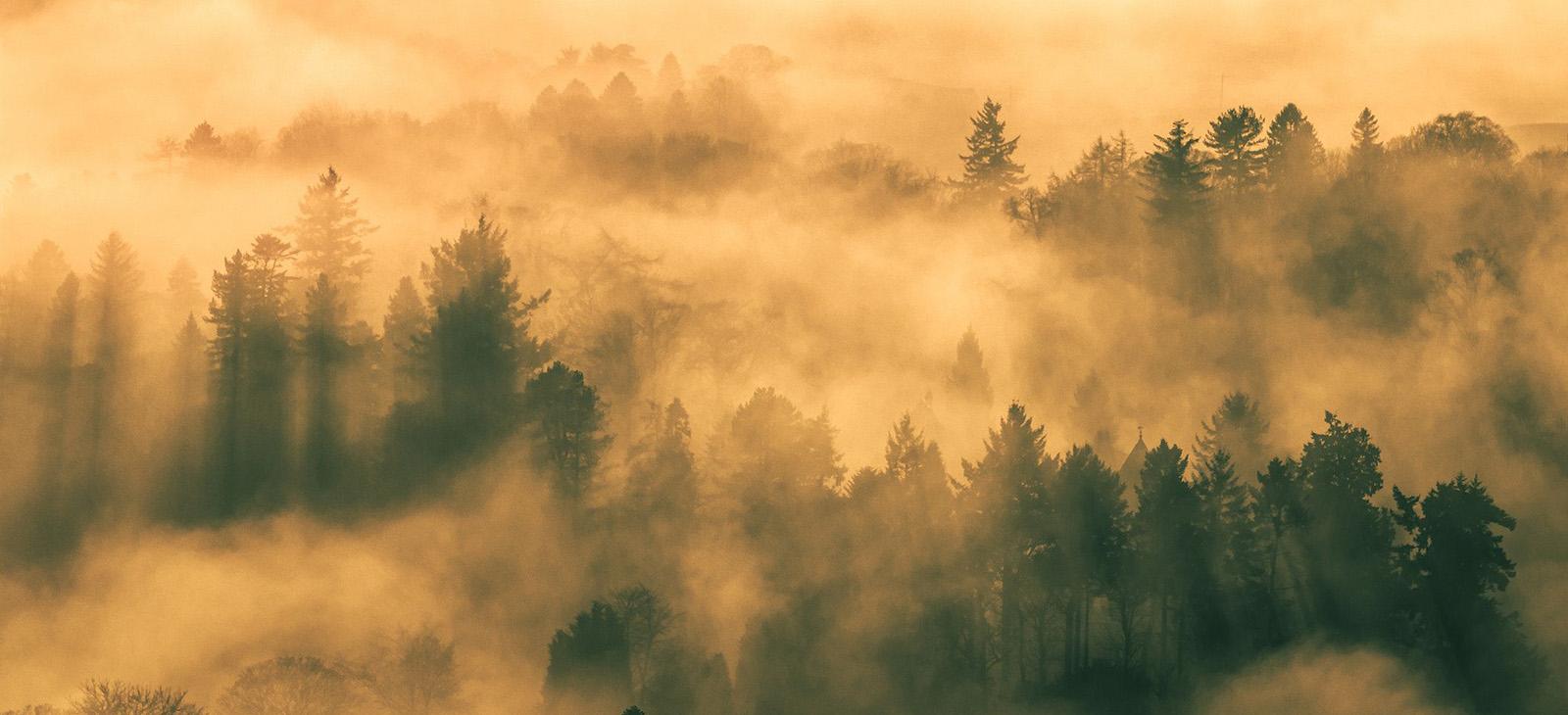 داستان شکل گیری جنگل ها