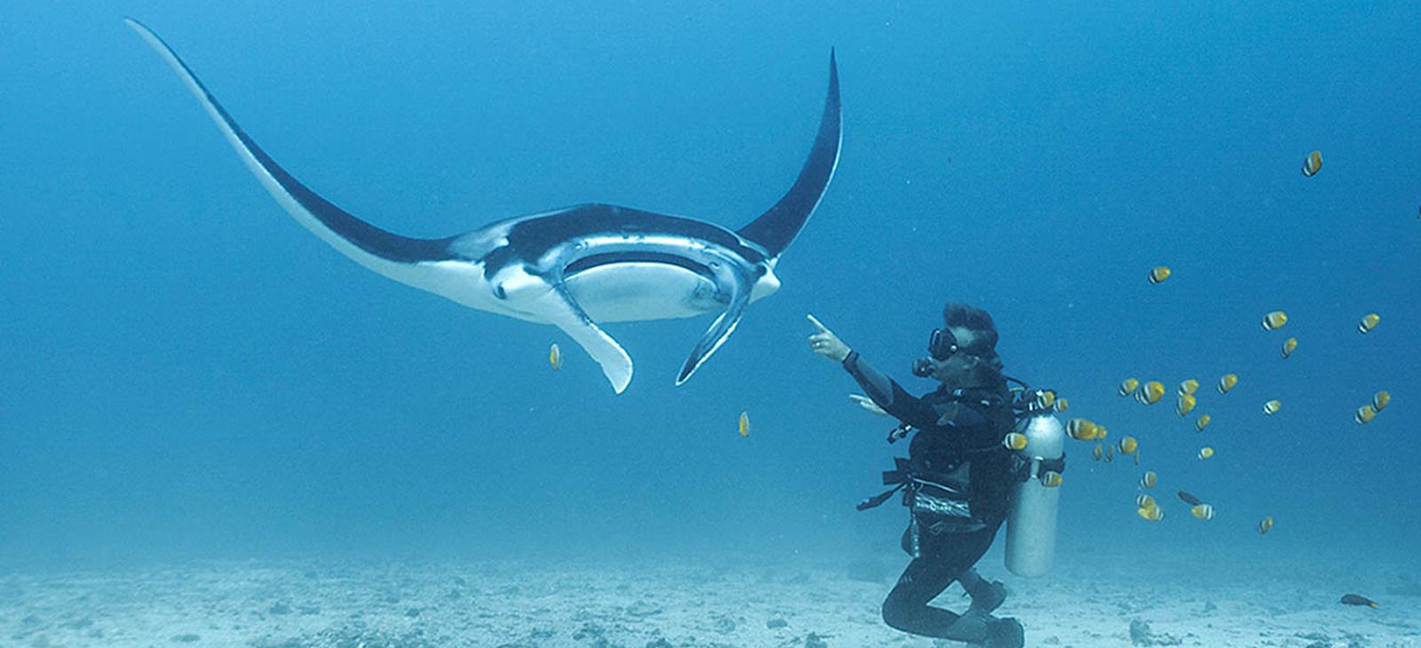 غواصی از در آب های آزاد